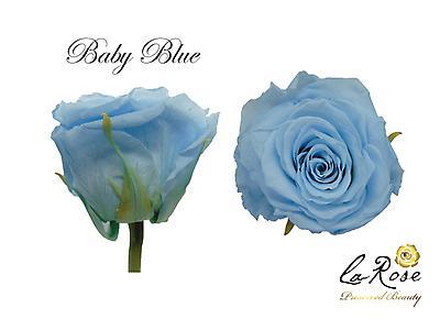 Rosa preservada baby blue