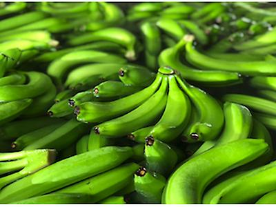 Plátano orgánico, orgánico de comercio justo, convencional de comercio justo y convencional