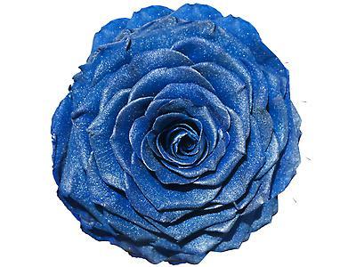 Rosa preservada tamaño Jumbo, satinado