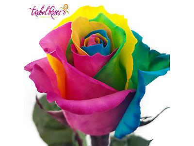 RAINBOW TINTED ROSE