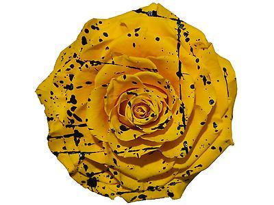 Rosa preservada tamaño Jumbo, jaspeado
