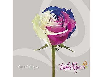 COLORFUL LOVE TINTED ROSE