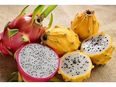 Pitahaya amarrilla - Yellow Dragon Fruit