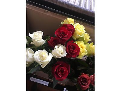 Rosas de exportacion