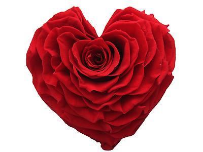 Rosa preservada tamaño Jumbo, forma corazon