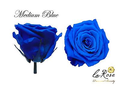 Rosa preservada medium blue