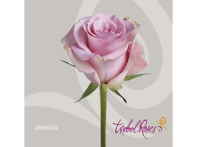 JESSICA ROSE
