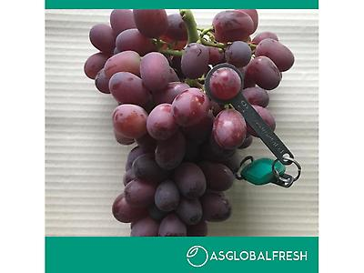 UVAS DE MESA CRIMSON SEEDLESS