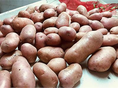 Papas, Patatas, Batatas, Frescas Chilenas