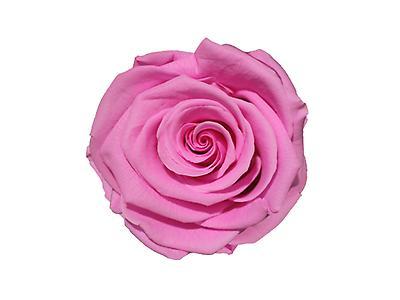 Rosa preservada tamaño large, color solido