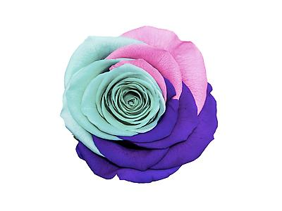 Rosa preservada tamaño large, arcoíris
