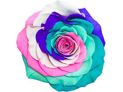 Rosa preservada tamaño Jumbo, Arcoiris