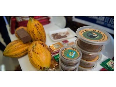 Cacao orgánico certificado