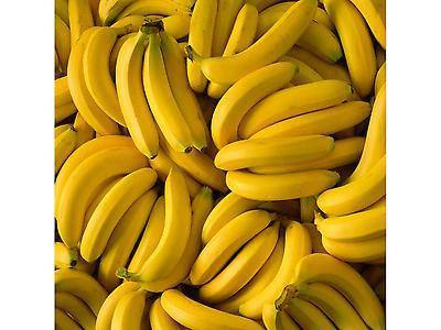 Banana Cavendish Premium
