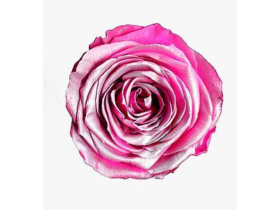 Rosa preservada tamaño mediano, satinada