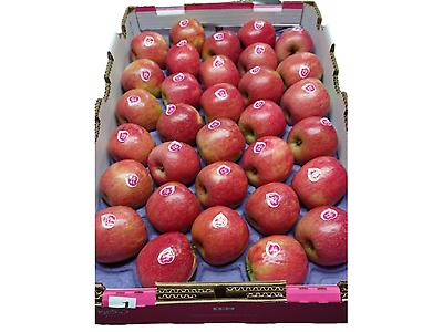 Cripps Pink and Pink Lady apples