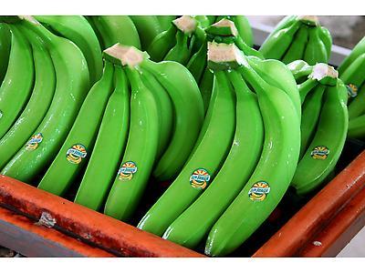 Conventional Bananas